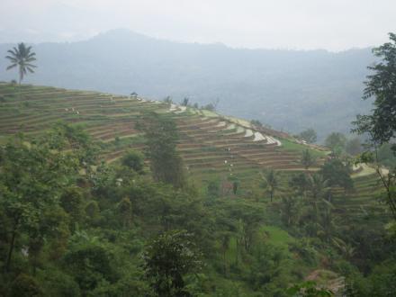 website desa jombok songgo langit